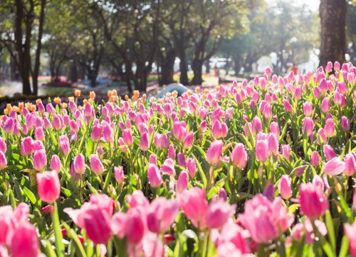 Spring and Labour Day, National holiday