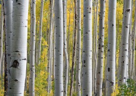 Thirsty? Have a cup of birch!...