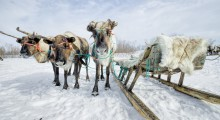 What to do in Russia in Winter?